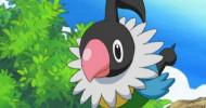Ado Chatot Is Regional Exclusive In Pokemon Go