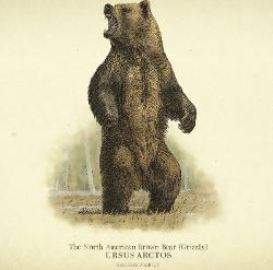 grizzly-bear-screenshot