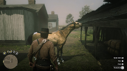 rdr-2-how-to-get-best-horse-early-screenshot