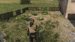 plants-food