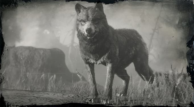 Black and white image of a wolf