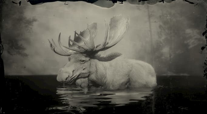 black and white image of a white moose in the water.