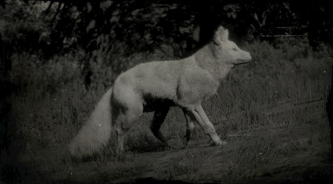 Black and white image of a white fox on a slope.