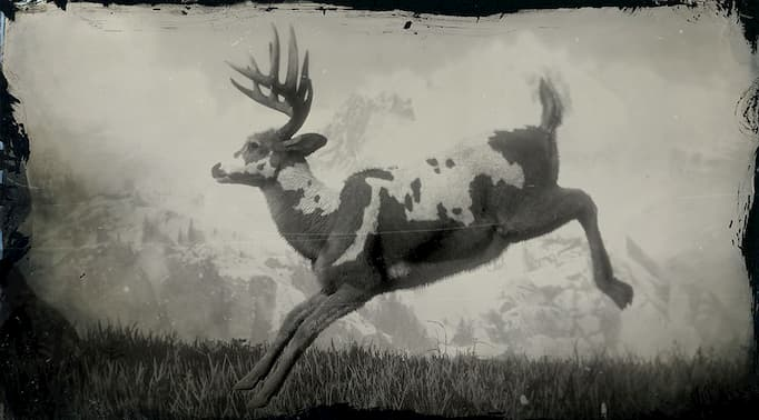 Black and white image of a piebald buck jumping.