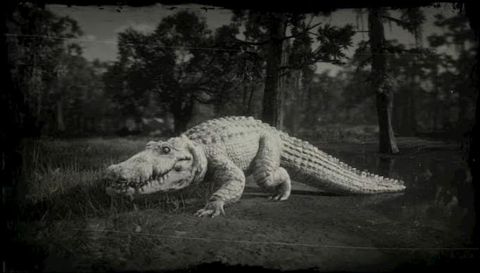 Black and white image of a white alligator