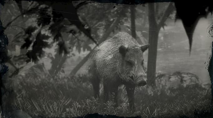 Black and white image of a boar with scars on its face.