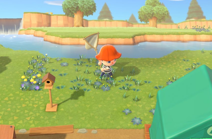 How to sneak up and capture bugs in Animal Crossing: New Horizons