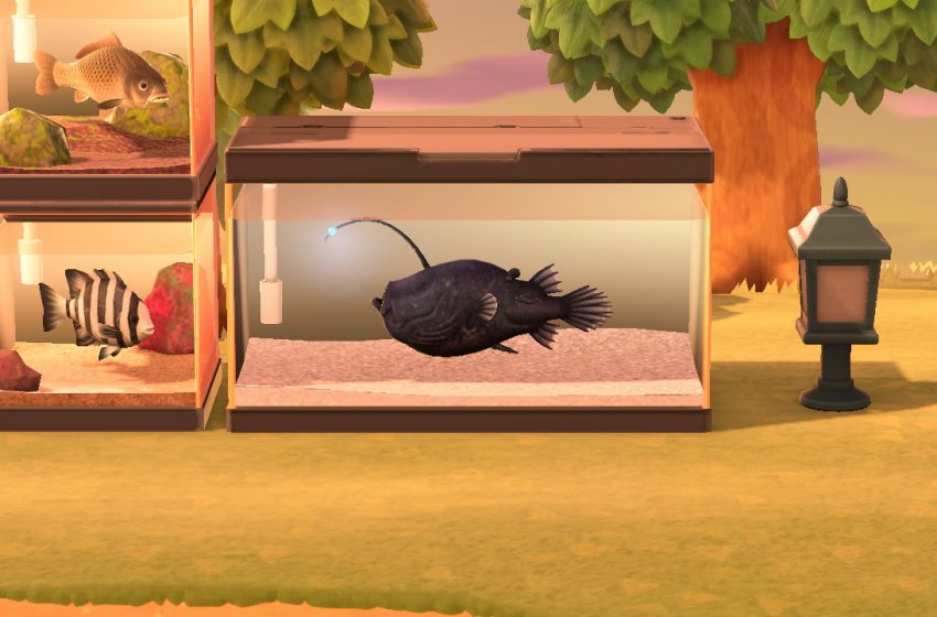 How to catch a football fish in Animal Crossing: New Horizons