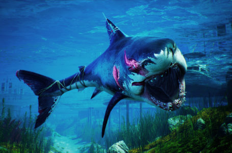 Do you become a Megalodon in Maneater?