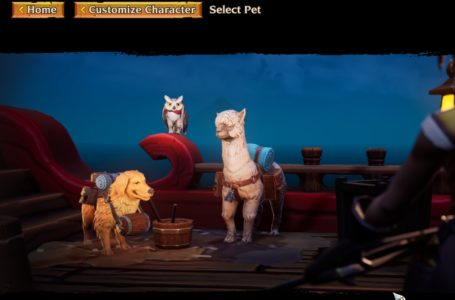 How to get pets in Torchlight III
