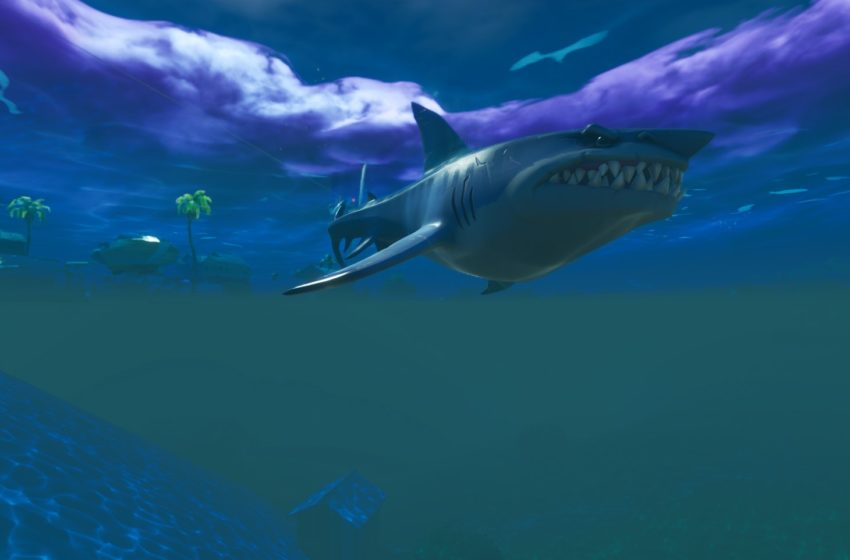 Loot Sharks