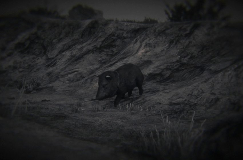 Where to find collared peccaries in Red Dead Online