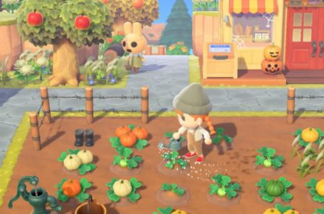How to get and grow Pumpkins in Animal Crossing: New Horizons