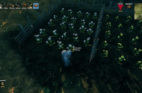 How to get carrot seeds in Valheim