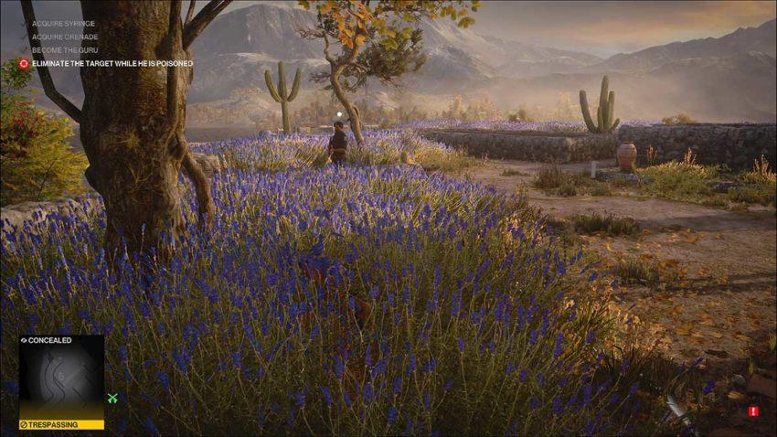 more-lavender-hitman-3