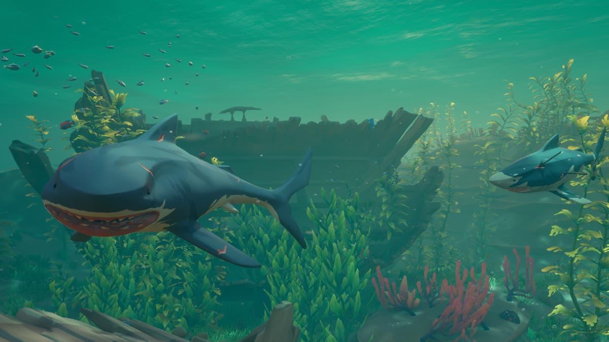 Sea of Thieves Shark