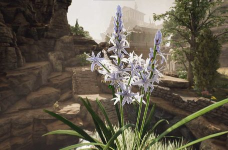 How to get the Pretty Flower for Galerius in The Forgotten City