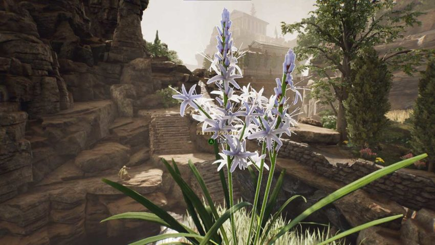 how-to-get-the-pretty-flower-in-the-forgotten-city