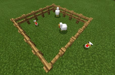 What do chickens eat in Minecraft?